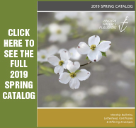 Anchor Wallace 2019 Spring Catalog